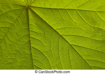 Green Leaf - A Colourful Macro Photo of a Veined Leaf
