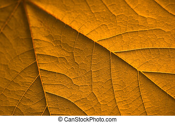 Golden Leaf - A Colourful Rustic old Autumn Leaf in all its...