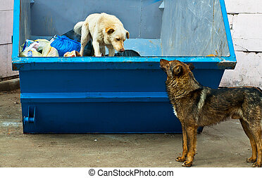 dustbin. - dogs in dustbin.