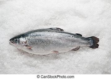 salmonid trout on ice - Fresh raw salmonid trout on ice