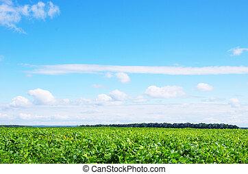 capim, verde, paisagem