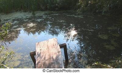 swamp 1 - swamp