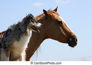 Australian Shepherd dog with a horse