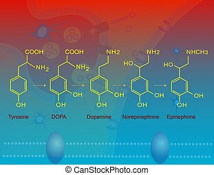 Biosynthesis of epinephrine - Illustration of the basic...