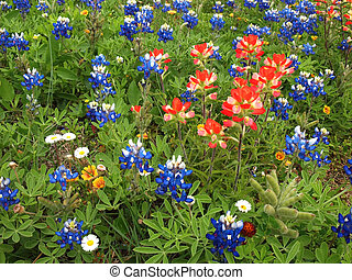 Texas Field - Field of Texas wildflowers on a sunny...