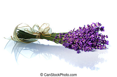 Lavender against white background - Lavender flowers...