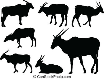 Eland antelopes - vector