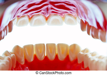 Tooth model - The model of a tooth. Lies on a white...