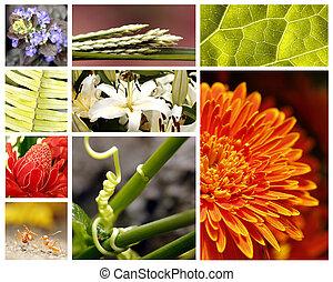collage, natura