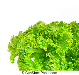 green leaves lettuce isolated on white
