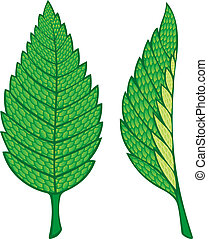 Mint leaves - Two green mint leaves illustration isolated on...