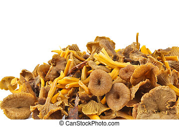 Funnel Chanterelle. Close up on white background