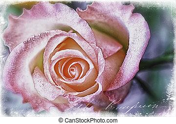 Rose with vintage illustration