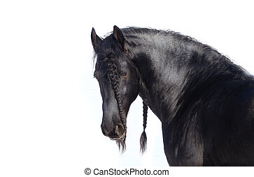 beautiful frisian stallion