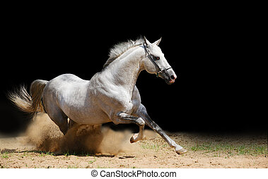 white stallion in dust