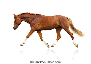 horse isolated on a white