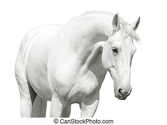 white horse high key