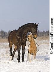 caballos, juego