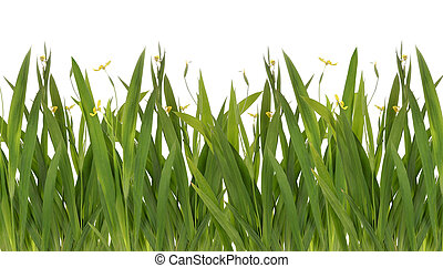 green grass with yellow flower Isolated On White -...