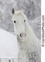 stallion in winter