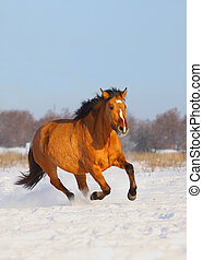 horse in winter - light bay horse galloping in the snow