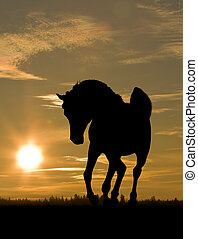 arab horse in sunset - arab horse silhouette on a sunset sky...