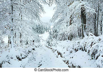 Snowbound winter earthroad through beautiful mountain forest...