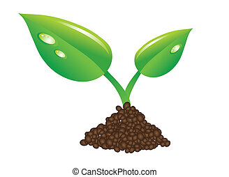 green sprout and soil - young green plant sprout...