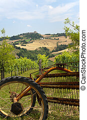 Marches (Italy) - Landscape at summer: vineyards and old plough