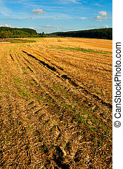 Harvested Agricultural Field