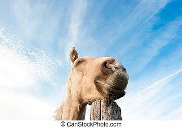 caballo, Soñar