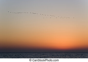 Birds of passage - A sunset above Mediterranean sea and...