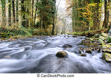 Forest stream - Autumn forest stream