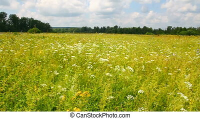 pan landscape with summer meadow