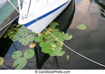 Boats bow in marina