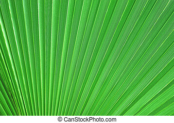 Palm tree leaf - Big backlit palm tree leaf close-up