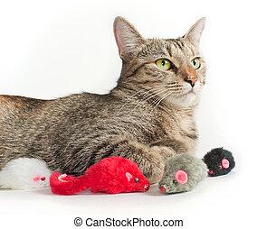 acostado, gris, gato, juguete, ratones