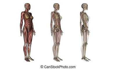 human body  - image of human body