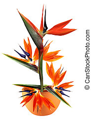 bird of paradise flower in pot - floral arrangement of...
