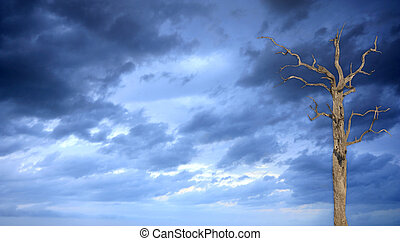 stormy sky with a single tree - a stormy sky picture take...