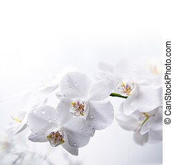 blanco, orquídea, agua