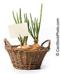art spring onions growing in the basket - spring onions...