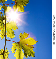 autumn background autumn vine leaves against the blue sky