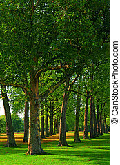 Kensington Gardens, London - Trees in Kensington Gardens at...
