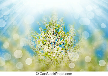 Blossoming branches tree with sun light. Abstract bokeh