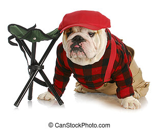 hunting dog - english bulldog dressed like a hunter wearing...