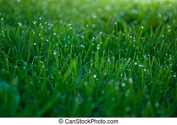Water rain droplets blades of grass - Water rain droplets on...