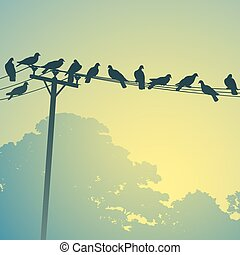Birds on a Lines - Lots of Birds on Telephone Lines