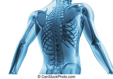 Skeleton of the man. 3D the image of a man's skeleton under...