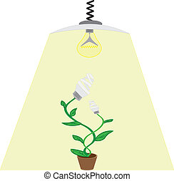Evolution  ecology bulb light